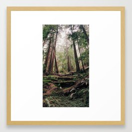 John Muir Woods Framed Art Print