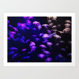 Jellyfish - purple and pink Art Print