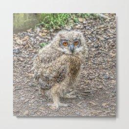 Painted Baby Owl Metal Print
