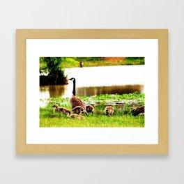Canada Goose and Goslings Framed Art Print