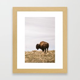Bison checking the surroundings Framed Art Print