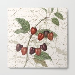 Vintage Botanical Cherry with Distressed Script Digital Collage Metal Print