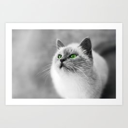 Black and white cat with green eyes Art Print
