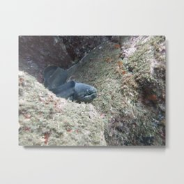Black Moray Metal Print