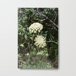 Queen Anne's Lace II Metal Print
