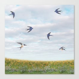 barn swallows, day lilies, and chicory Canvas Print