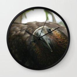 Kaka : New Zealand Endemic Wall Clock