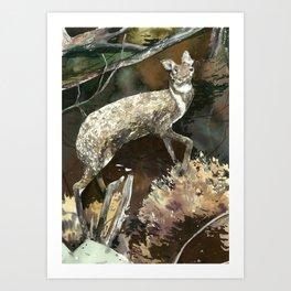 musk deer Art Print