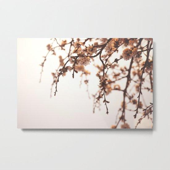 Cherry Spring Metal Print