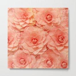 Pink Camelias... Metal Print