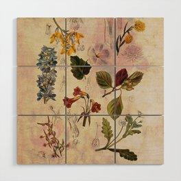 Botanical Study #1, Vintage Botanical Illustration Collage Wood Wall Art
