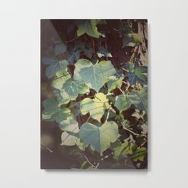Trailing Ivy #2 Metal Print