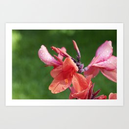 Canna Lily Tropical Macro #1 Art Print
