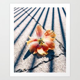Tulip Stripes Art Print