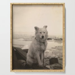 Dog on Nansen's Fram Expedition to the Arctic Serving Tray