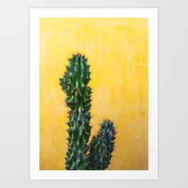 Cactus in Mexico City Art Print