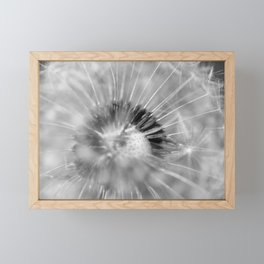 Dandelion b&w Framed Mini Art Print