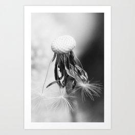 Dandelion 2013 no.4 Art Print