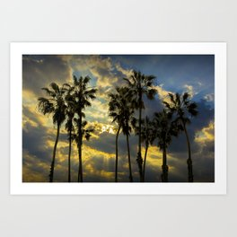 Sunbeams and Palm Trees by Cabrillo Beach Los Angeles California Art Print