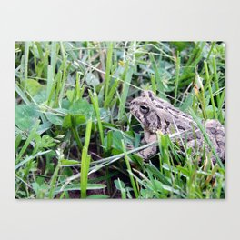 The Waiting Frog Canvas Print