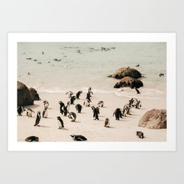 Penguins at the Beach - Boulders Beach, Simon's Town, South Africa | Travel Photography Art Print