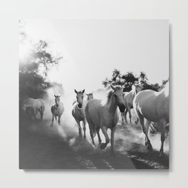 Camargue Horses VX Metal Print