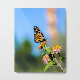 Monarch Visitor Metal Print