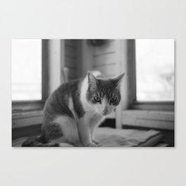 Solemn Kitty  Canvas Print