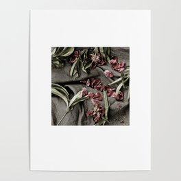 "Peonies are beautiful from the ""bud to to the end."" Poster"