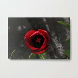 Tantalizing Tulip Metal Print