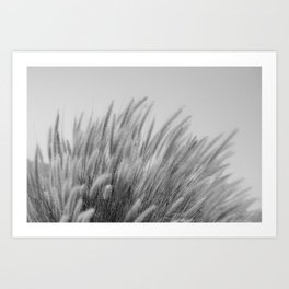 Foxtails on a Hill in Black and White Art Print