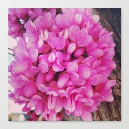Lovely flower Canvas Print