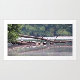 Turtles on log Art Print