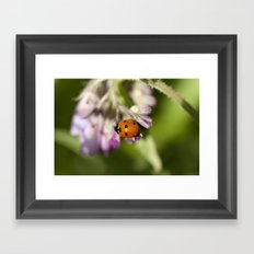 Ladybird in Spring Framed Art Print