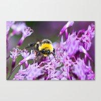 bee Canvas Prints featuring Bee by Dora Birgis