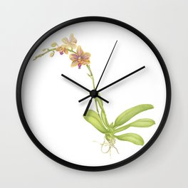 Pink and yellow flowering orchid Wall Clock