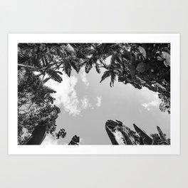Rainforest Canopy - Tropical Sky Black and White Art Print