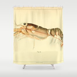 Vintage Baby Lobster Illustration (1895) Shower Curtain