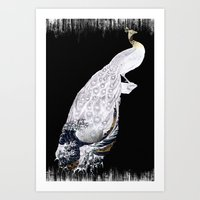 Peacock on black Art Print