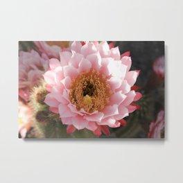 Flor de Cactus Metal Print