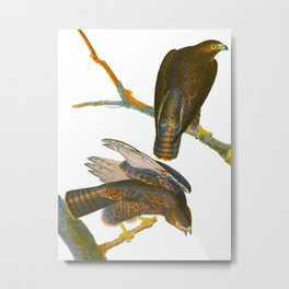 Black Warrior Bird Metal Print