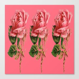 ROSE COLORED ANTIQUE VINTAGE ROSES Canvas Print