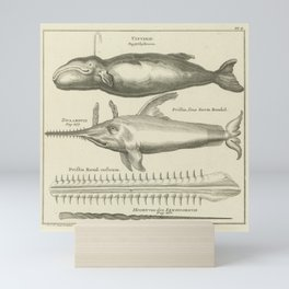 Whale and Sawfish Vintage Print Mini Art Print