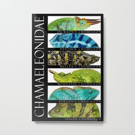 Chameleons of the World Metal Print