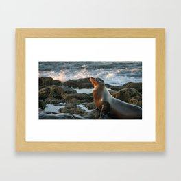 Majestic Sunbathing Seal Framed Art Print