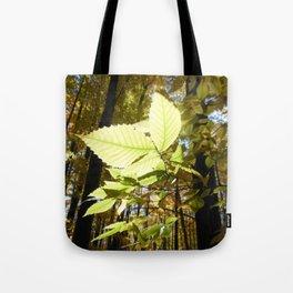 Fagus grandifolia Tote Bag