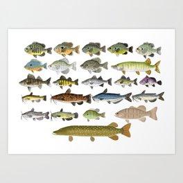 Freshwater Fish Group Art Print