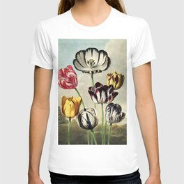 Tulips : Temple of Flora of New illustration of the sexual system of Carolus von Linnaeus T-shirt