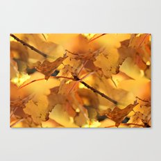 Canopy of Gold Canvas Print