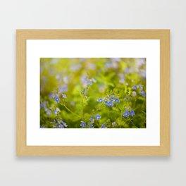 Beautiful blue speedwell flowerets Framed Art Print